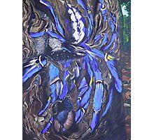Poecilotheria metallica Photographic Print