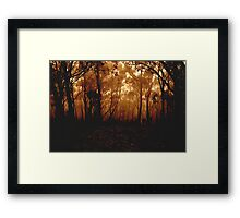 Bushland Mystery Framed Print