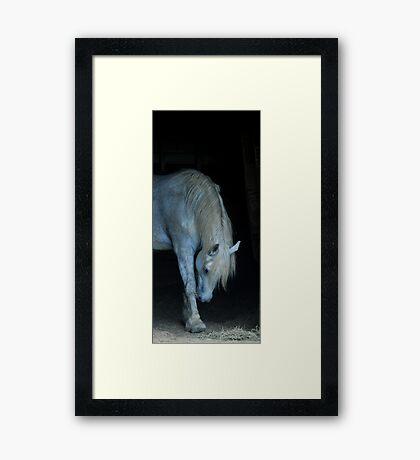 Take A Bow Framed Print