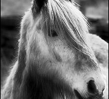 Grey Horse by Epicurian