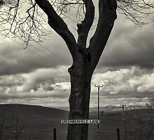 Sign Post Tree by Lee  Gill