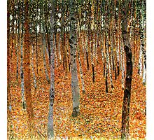 Beech Forest by Gustav Klimt Photographic Print
