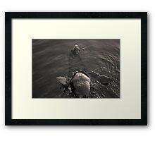 Sea Lion IV Toned Framed Print