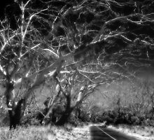 Dead trees  by mellosphoto