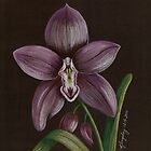 Purple Orchid by cyndikingsley
