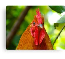Cockerel rooster with small comb Canvas Print