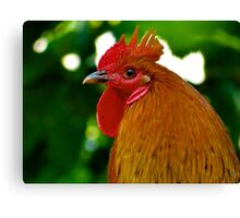Cockerel rooster with spike comb Canvas Print