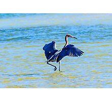Reddish Egret On The Hunt Photographic Print