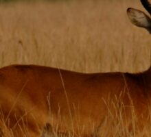Kenya wildlife in QENP tan Sticker