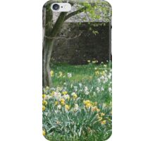 Spring Daffodils in Southern England iPhone Case/Skin