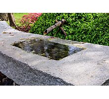 Japanese Garden Fountain Photographic Print