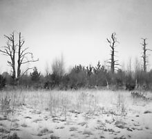 Digital Art Trees and Snow in Black and White by Natalie Kinnear