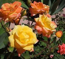 Roses by Joliidea
