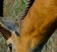 Kenya wildlife before QENP - grazing Sticker