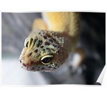 Little Leopard Gecko Poster