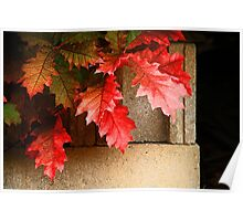 Leaves on Cement Blocks Poster