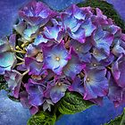 Purple Hydrangea by © Kira Bodensted