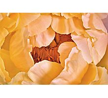 Freshness Abounds - A Peony Photographic Print