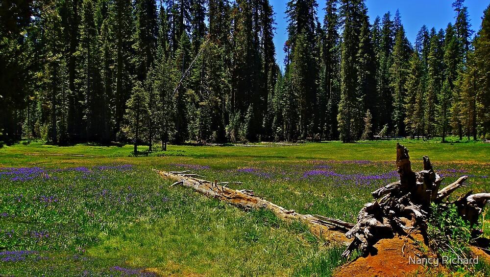Wild flowers in the meadow by Nancy Richard