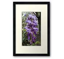 Purple Hanging Flowers  Framed Print