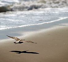 Coming In For Landing by Henrik Lehnerer
