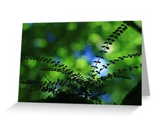 Privet With Sycamore & Sky - Vintage Lens Greeting Card