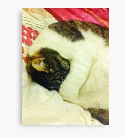 Grumpy Sleepy Cat Canvas Print