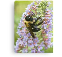 Dusted with Pollen Canvas Print