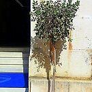 The Baby Olive Tree by Fara