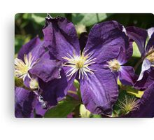 Purple Clematis from A Gardener's Notebook Canvas Print