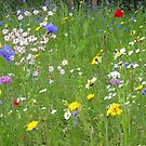 Wild meadow by Alan Findlater