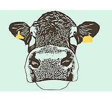 Lady Cow Photographic Print