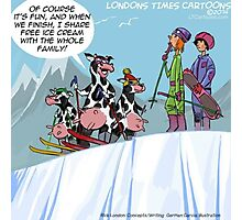 The Skiing Cows  Photographic Print