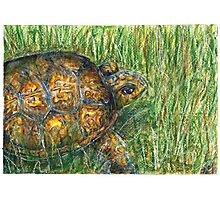 T is for Turtle Photographic Print