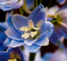 Blue Delphinium Flowers by EllieGraceOR