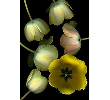 Tulip Fantasy Photographic Print