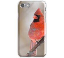 Cardinal rouge iPhone Case/Skin