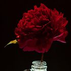 Peony in a gallon by scry