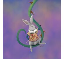 White Rabbit with Rose Thorns - Square Image Photographic Print