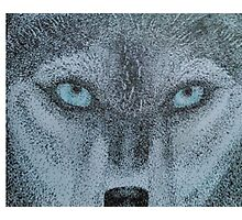 Husky with Blue Eyes Photographic Print