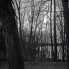 Reservoir Trees by Bill Wetmore