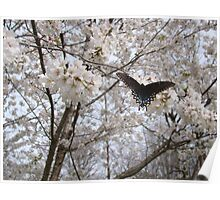 Butterfly on Yoshino Cherry Tree Poster