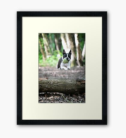 Look, I can fly! Framed Print