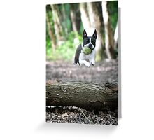 Look, I can fly! Greeting Card