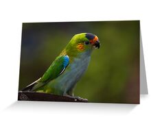 Purple-crowned Lorikeet Greeting Card