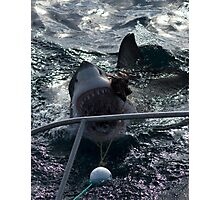 Great White Shark Goes for Bait Photographic Print