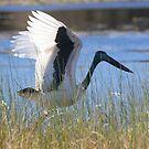 Wings Up by byronbackyard