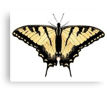 Tiger Swallowtail Butterfly 2 Canvas Print
