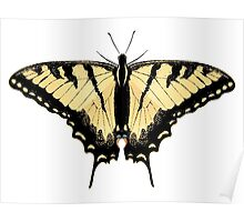 Tiger Swallowtail Butterfly 2 Poster