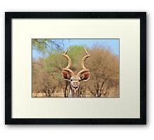 Kudu - African Wildlife Background - Spiral Beauty Framed Print